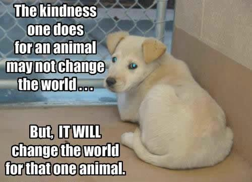 AnimalKindness