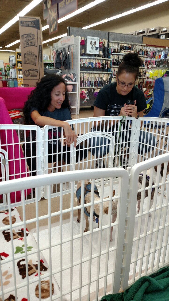 PETCO Adoption @ Petco @ the Form | Fort Myers | Florida | United States